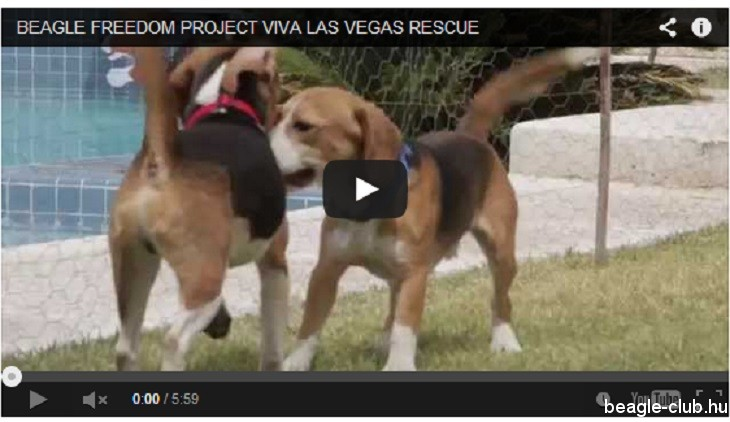 beagle-video