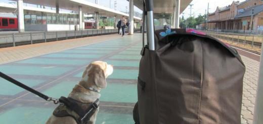 Költözés kutyával