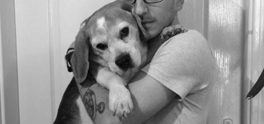 beagle_alex