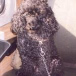 Blacky kutya 1990-2002