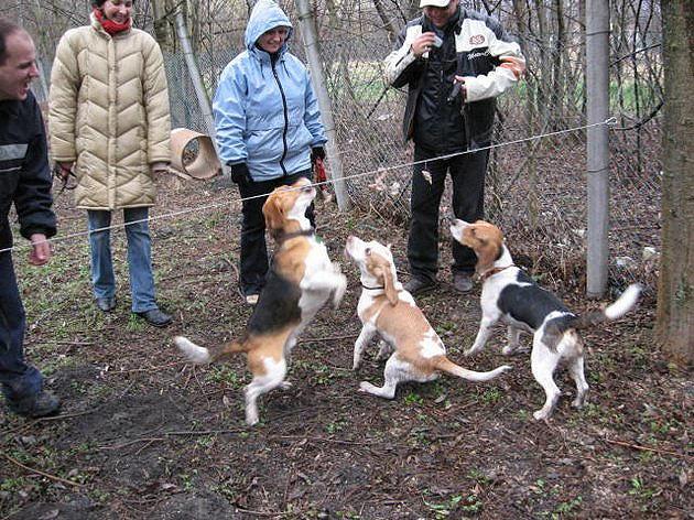 Balatoni Beagle Találkozó, 2007
