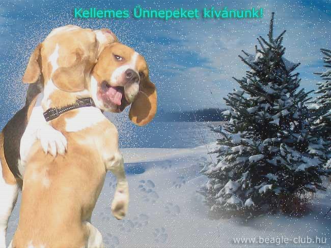 Karácsonyi beagle kutyás képeslap