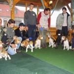 Beagle találkozó, Orfű 2004