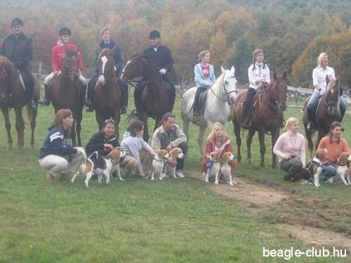 Beagle Találkozó Orfűn, sok beagle kutya