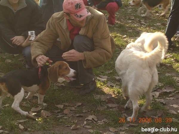 Dunaújvárosi Beagle Találkozó