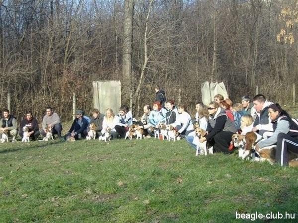 Dunaújvárosi Beagle Találkozó csoportkép