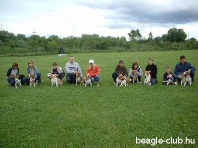 Miskolci beagle találkozó