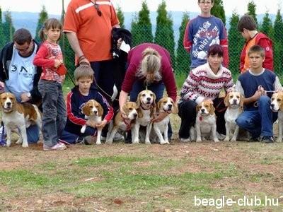Beagle Találkozó Orfűn