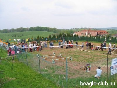 I. Pécsi Beagle Találkozó