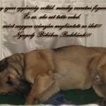 In memoriam Rudi