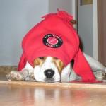 Beny beagle