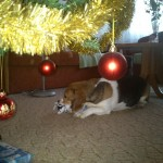 Uno a fa alatt