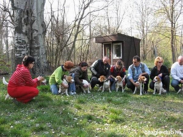 Balatonfüredi beagle találkozó, 2007.04.01.