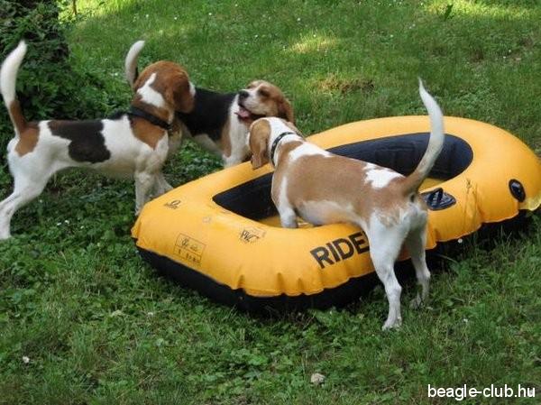 Balatonfüredi Beagle Találkozó, 2007.06.09.