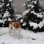 Gömbi kutya a hóban