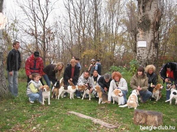 Beagle Találkozó Balatonfüreded, 2007.11.03.