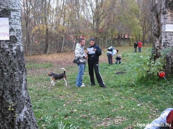 Balatonfüredi beagle kutya találkozó