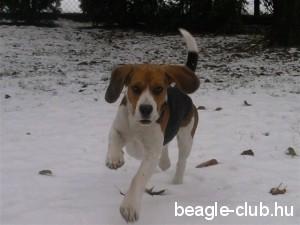 Byron a hóban