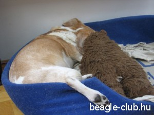 Beigli kutya alszik...
