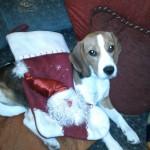 Bogyó első karácsonya :)