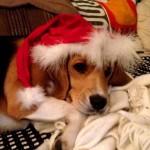 Karácsonyi Mandi