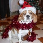 Sissy Karácsonya