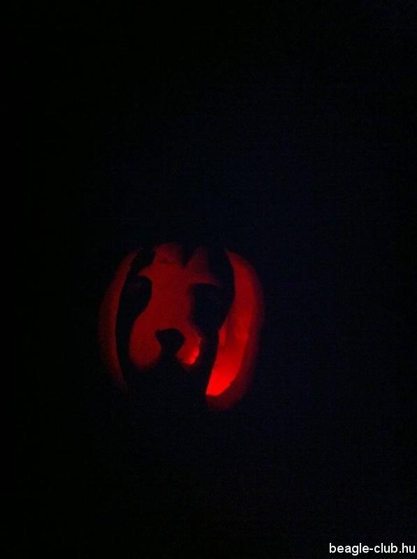 Halloween tök beagle