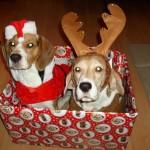 Karácsonyi ajándékok @kex0526