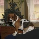 Karácsonykor a gazdi hátán pihenek (Rozi) @bobe