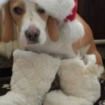 Leila első karácsonya @leila