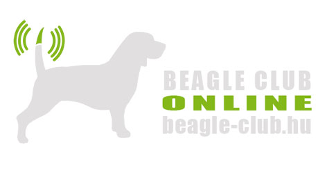 Beagle Club Online | Beagle kutya