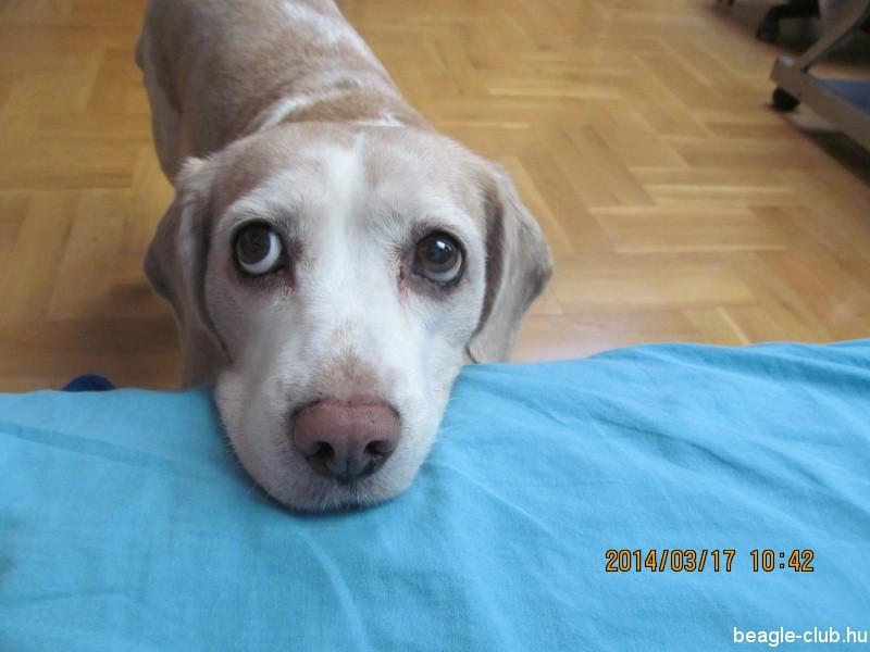 Kutya boci-szemek