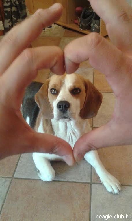 Bogyó beagle selfie