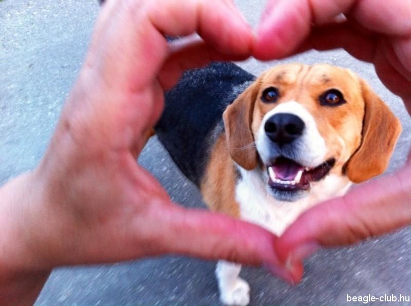 Drazsé beagle selfie