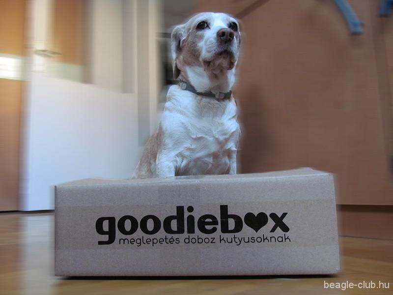 Goodieboxot a kutyáknak