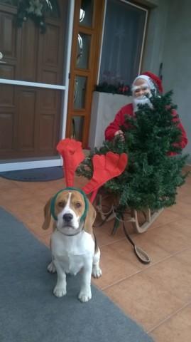 """Beagleszarvas :)"" @alibaba1"