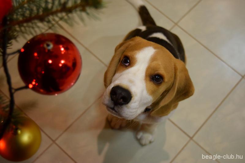 """""""Első Karácsonyom """" @diegoo"""