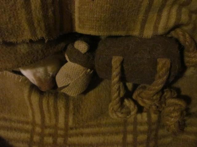 Kutyaorr a takaró alatt