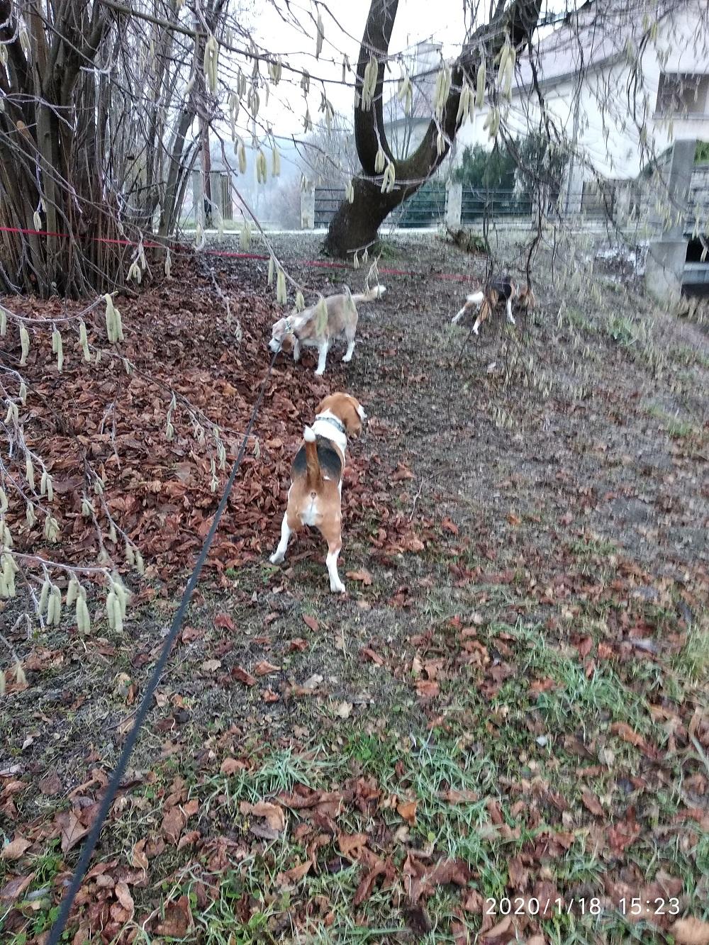 4. Beagle Korzó fotók - Szerelem Szigeten Veszprémben