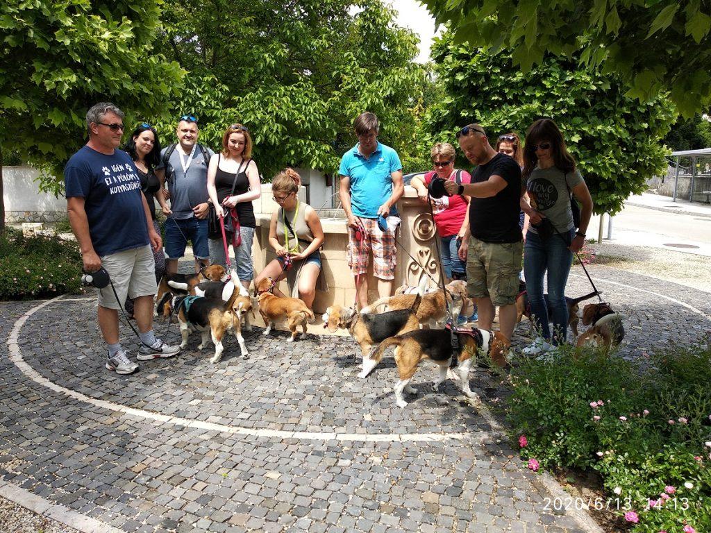 6. Beagle Korzó