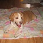 Snoopy profilképe