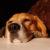 bejgliabeagle profilképe