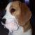 Garbo profilképe
