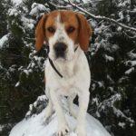laszlogreszler1 profilképe