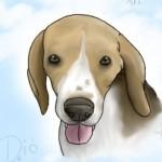 dio862 profilképe