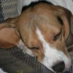 Alba profilképe