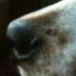 profilképe