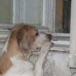 Szeparációs szorongás kutyáknál csoport logója