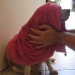 A beagle kutyák ápolása (kutyaszőr, stb.) csoport logója