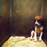 Laboros beagle kutyusok csoport logója